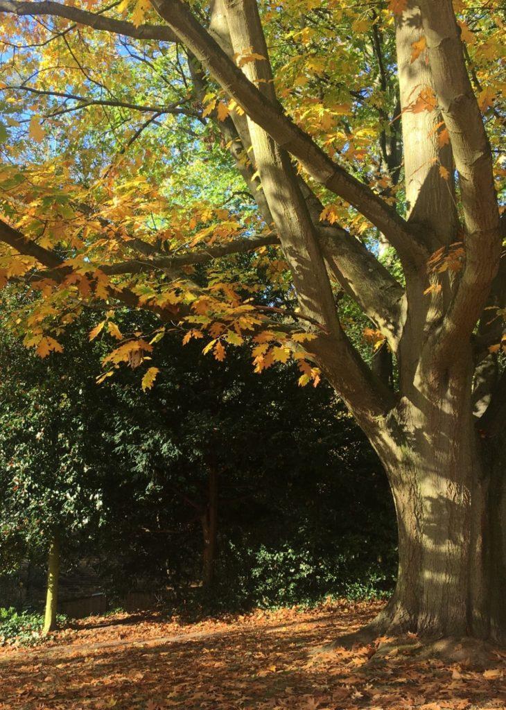 Autumn comes to Waterlow Park